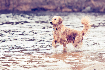 Photoshop Actions Pets People Photography Art