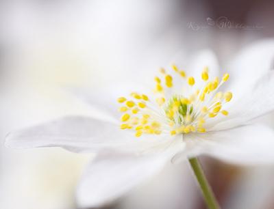 PSE Actions Photography Flower Macro Art