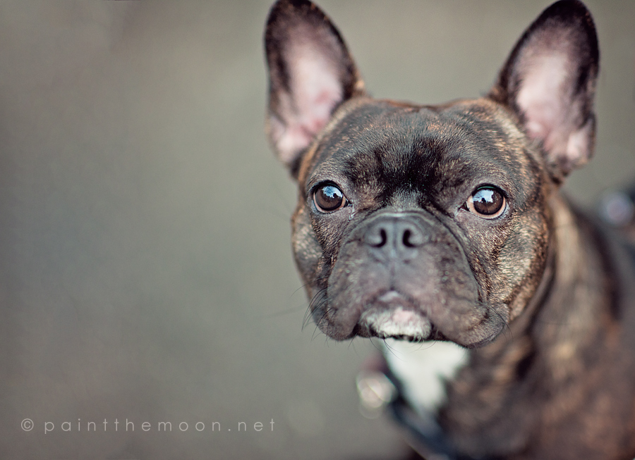photoshop actions portraits dogs