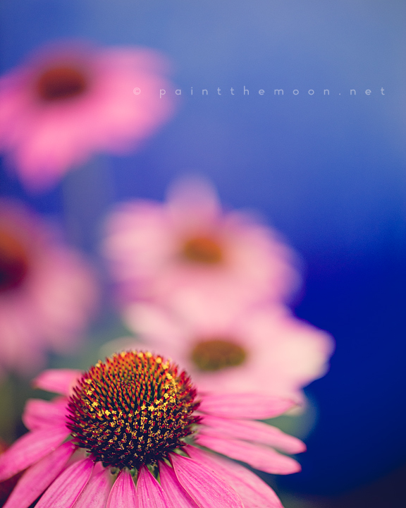 photoshop actions pse flowers macro tutorial details