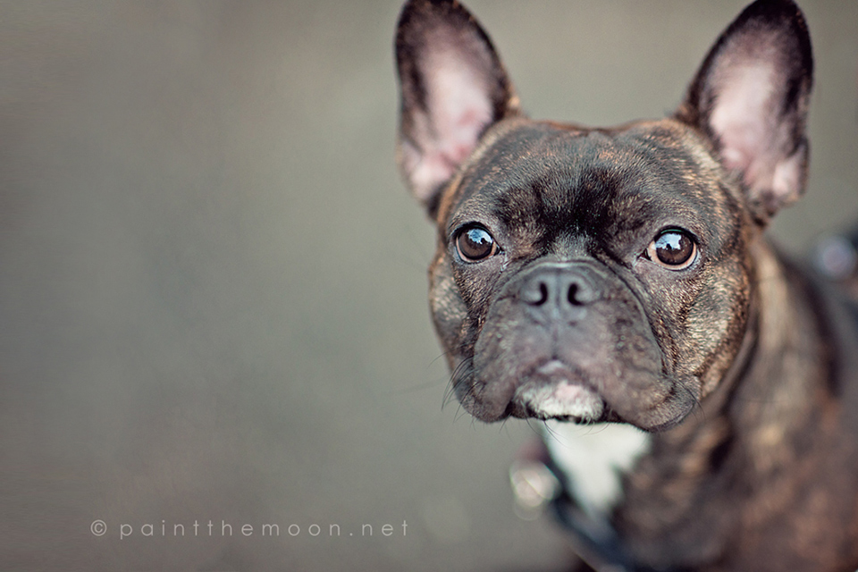Making Eyes Pop and Sparkle, Finding the Light in Photography, Pets, Dogs, Photoshop Actions
