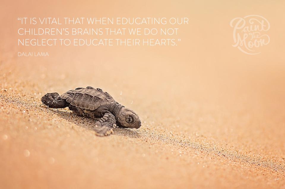 19-turtleb