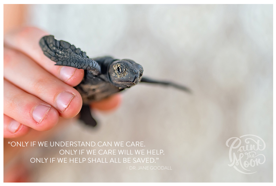 Baby Sea Turtle Quote - Photoshop Actions